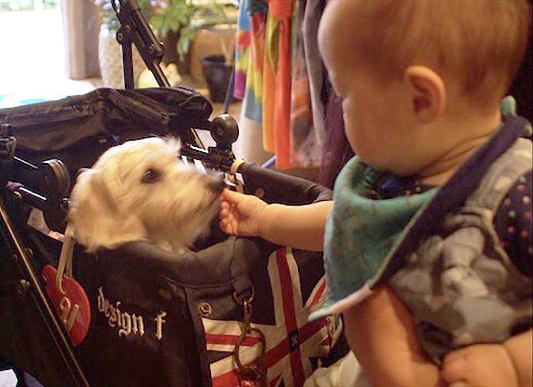 Across the UniverseはペットOK。常連のダックス犬のひなたくんと赤ちゃんの様子