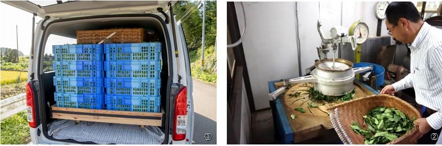 写真左が「摘んだ茶葉を車に積み重ねた写真。車は空調など改造した自社車」の様子右は「静岡の作業場」での様子