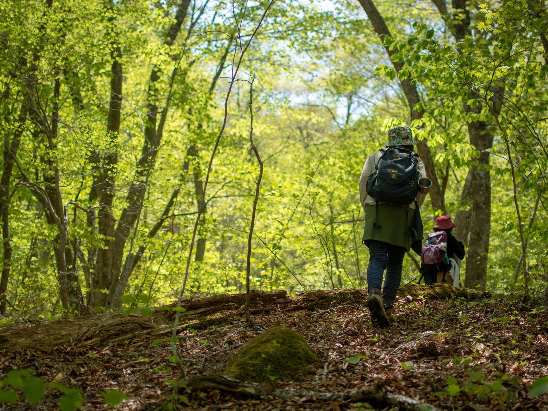 気が生い茂った中を登山スタイルの女性が歩いている様子。木々の隙間からは青空か見える