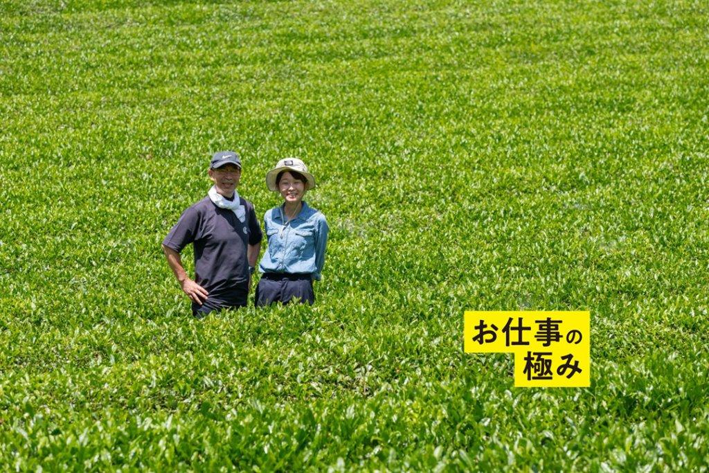 ファームソレイユ東北の茶畑
